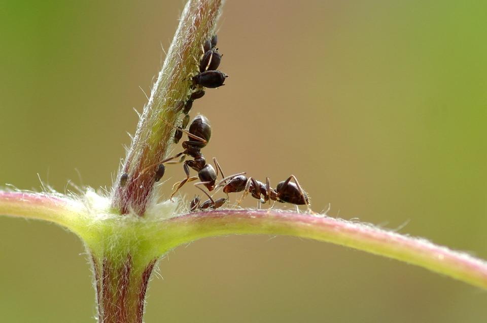 DOES BAKING SODA KILL ANTS?
