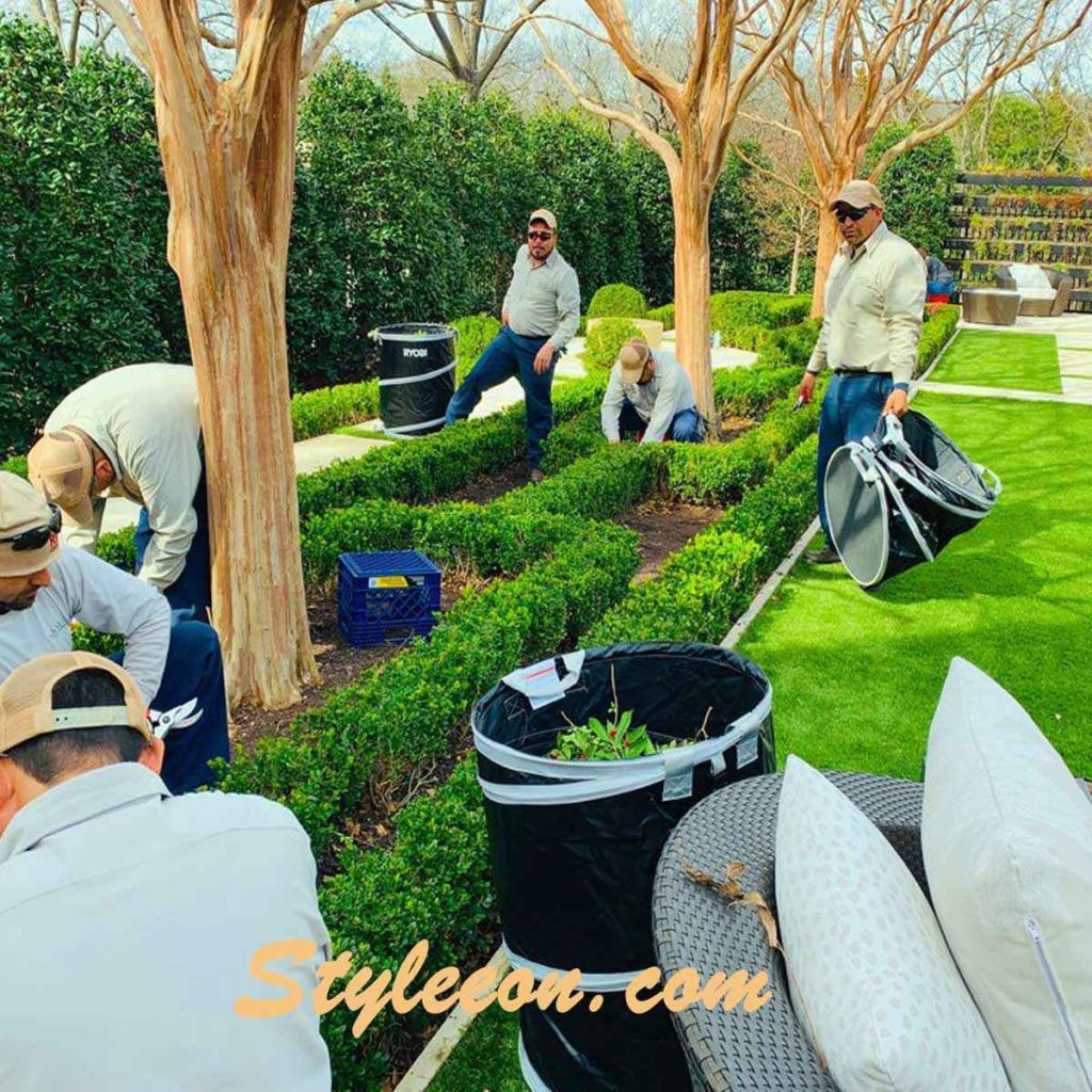 How To Take Care Of Green Beauty Boxwood?