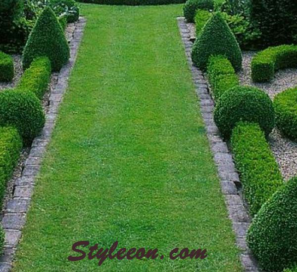 Make More Formal Gardens with Green Beauty Boxwood