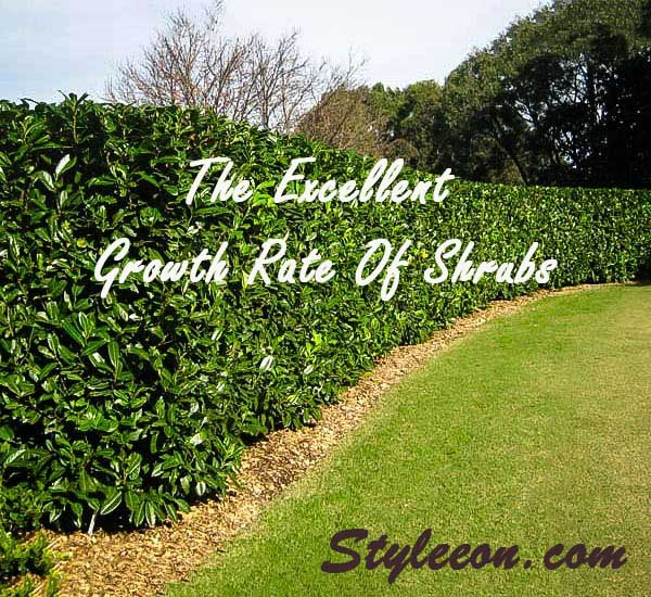 The Excellent Growth Rate Of Shrubs
