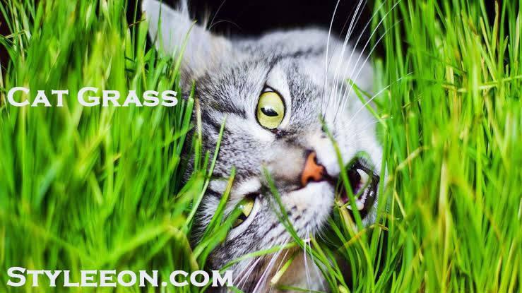 Cat Grass - Styleeon.com