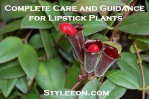 Lipstick plant - Styleeon.com