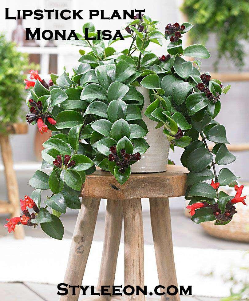 Mona Lisa  - Styleeon.com