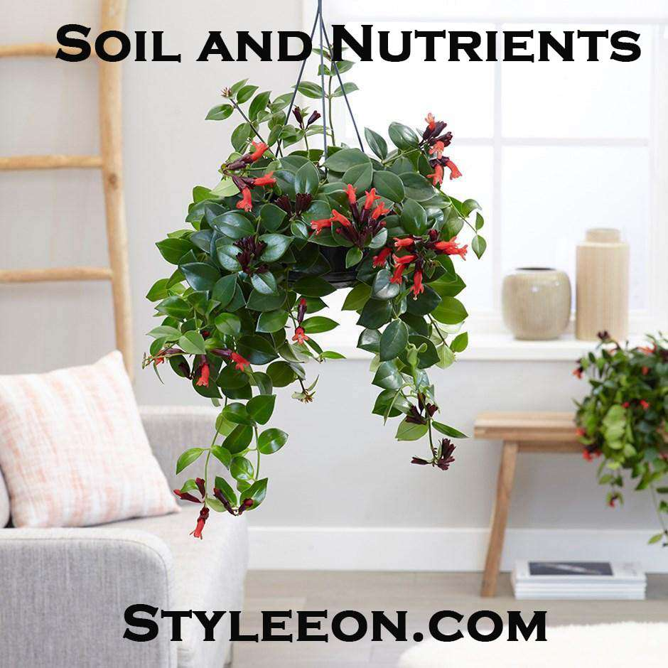 Soil and Nutrients   - Styleeon.com