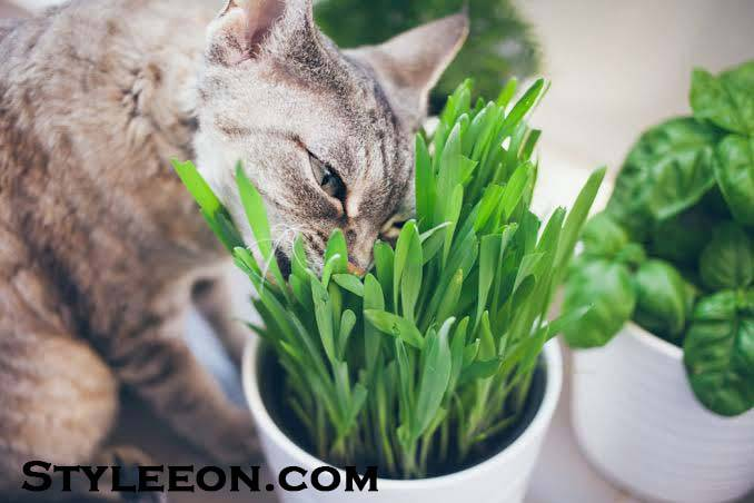 What is the reason that cats eat grass? - Styleeon.com